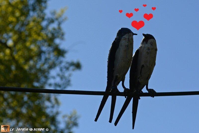 Oiseaux-amoureux