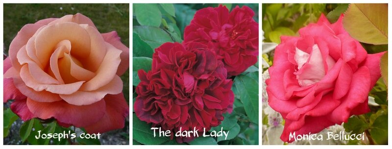The Dark Lady et cie