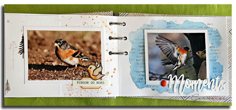 Oiseaux de mon jardin (16)