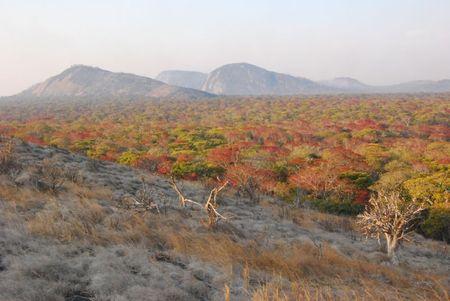 Zambie (590)