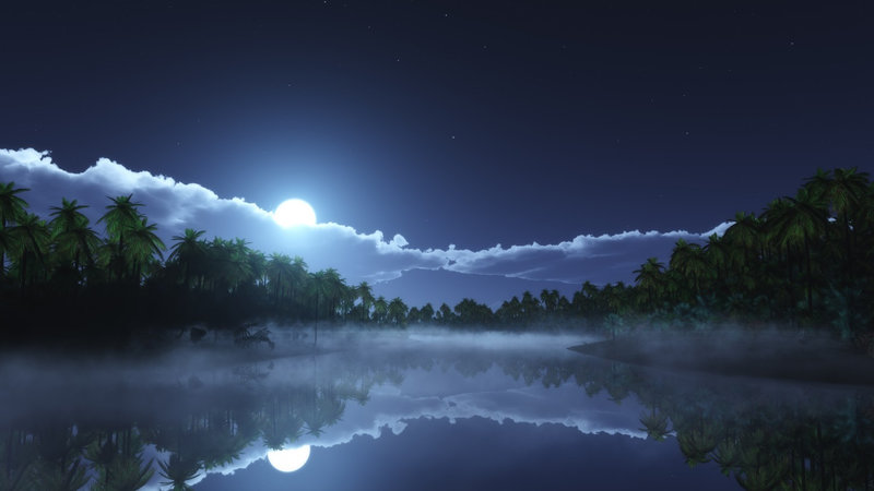 moon-light-night-time-palm-trees-body-of-water-reflection-1502x845-4053