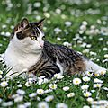27_w_Virus pâquerettes_11 05 04_1203