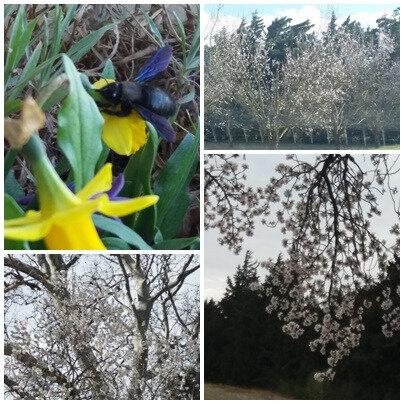 Printemps & fleurs (2)