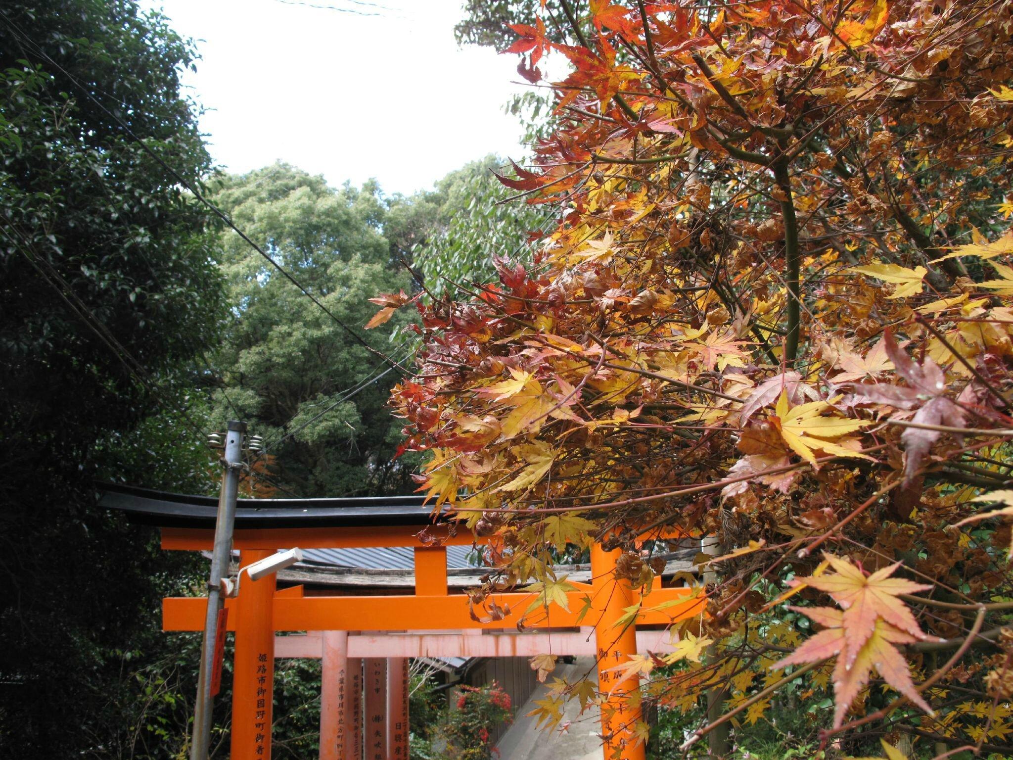 l'arbre à la feuille rouge et kannon aux 1000 bras - arigato zen en