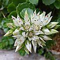 P1080004 Fleur originale
