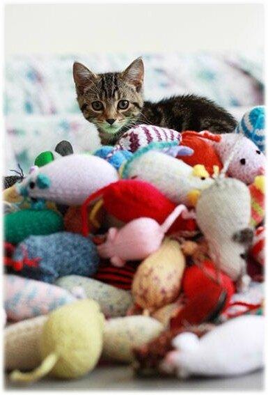jouet chat (1)