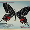 Grandes images ... anciennes images les papillons * biscottes clément