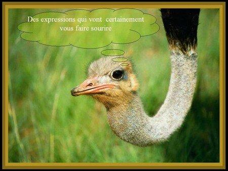 Copie_de_Sans_titre_1