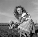 1945_meadow_sitting_sheep_by_dd_mmad133