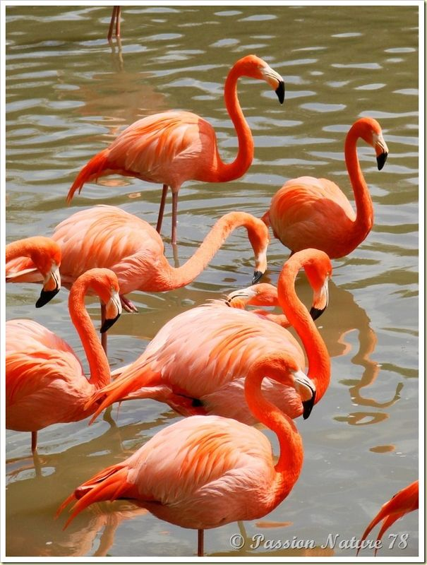 Les flamants roses (19)