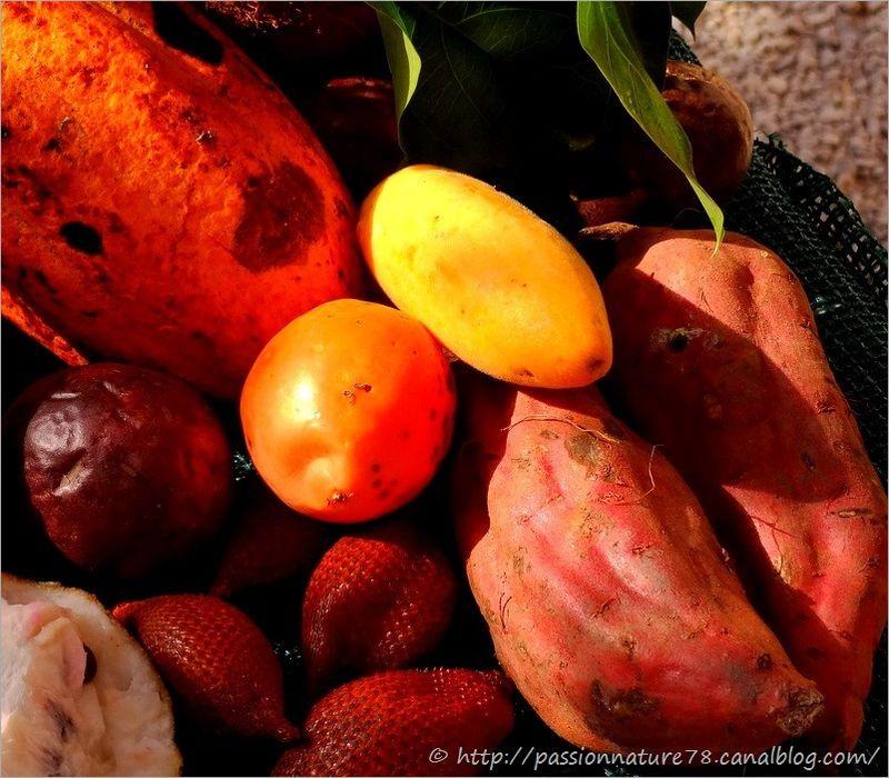 Fruits exotiques (10)