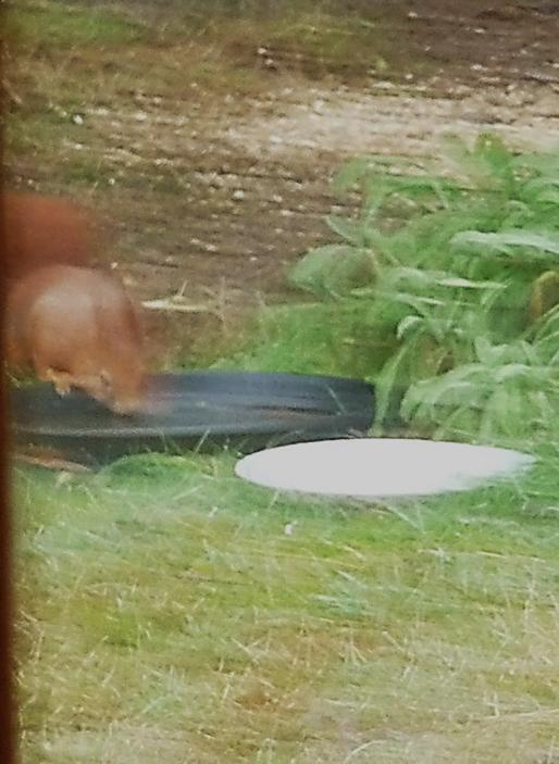 écureuil 6