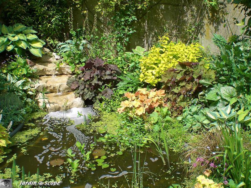 Le jardin d'eau d'André, près de la maison.