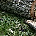 IMG_7570 a