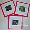 Lot 3 cartes fleurs des champs