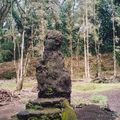 lava tree_06