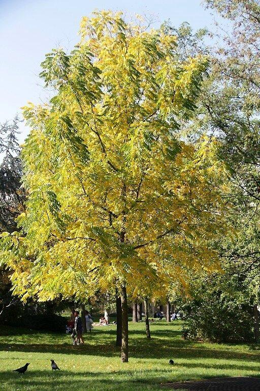 1-Bois de Vincennes 17_2523