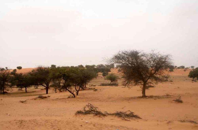 Seckasysteme-Mauritaniesenemauritanie07%20049_jpg_rs