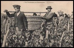 vendanges champagne