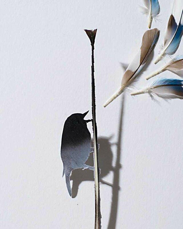 featherfolio01