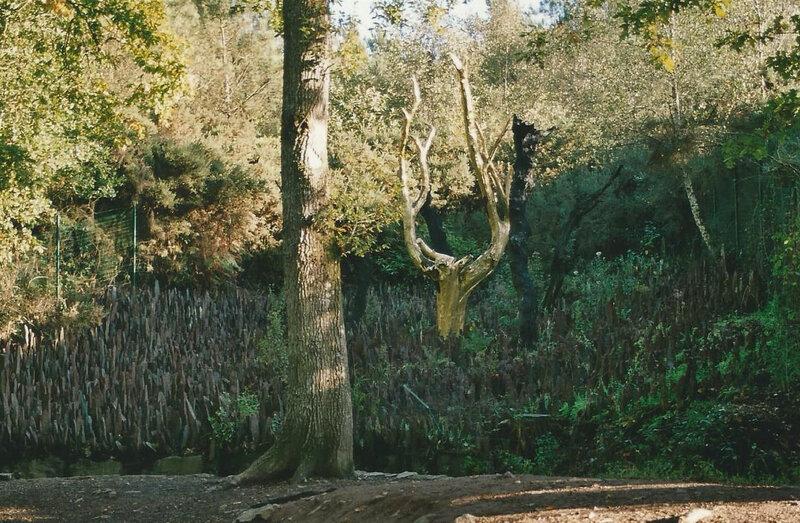 L'arbre d'or-PAIMPONT