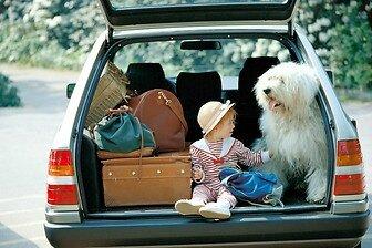 sentada-viajes-animales-personas-41799