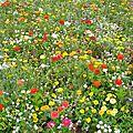 La quête des graines pour plaine fleurie