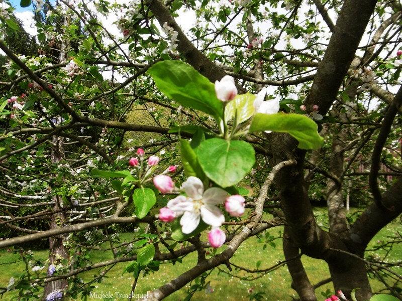 1-Fleurs de Léon 070419