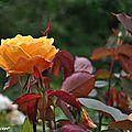 Rosier Orientalia