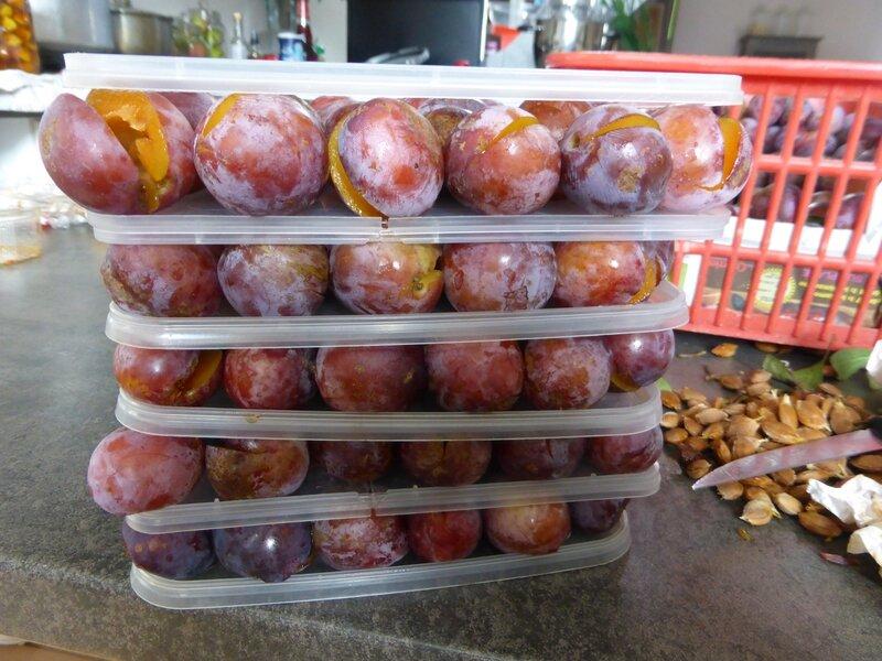 14-prunes Babette (1)