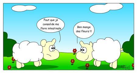 new_mouton07