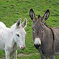 L'aide de l'âne en erythrée