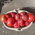 Récolte tomates du jardin - Août 2018
