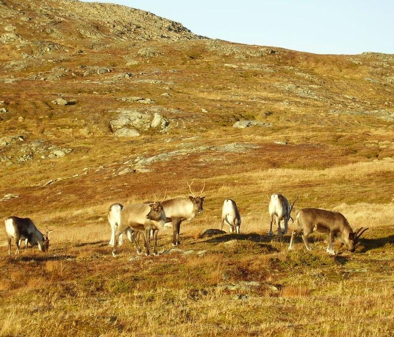 17-10-08 Sortie Montagne et rennes (133)