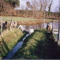 2) les moutons :les moutons nous ont été donnés