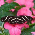 Butterfly (121)