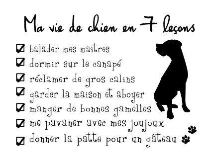 ma vie de chien