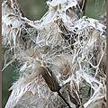 Entre graine et laine