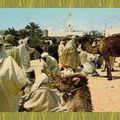 Marché de chameaux au Souk d'El-Oued années 40.