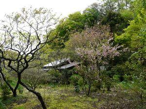 Canalblog_Tokyo03_14_Avril_2010_061