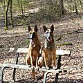 Nos malinois font une pause