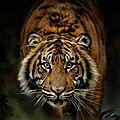 tigre1280