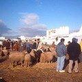 Le marché aux moutons