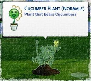 cucumber jeune