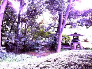 waseda_garden