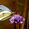 papillon et araignee
