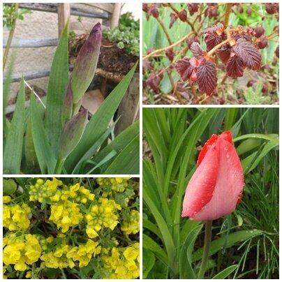 Jardin avril (2)