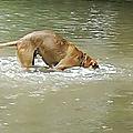 Moka sous l'eau