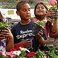 eligiendo las flores para plantarlas