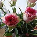 Des roses rose en hiver